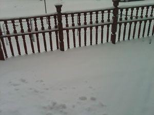 Snow day 2-22-2010