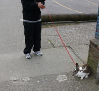 Bunny on a leash  in Alaska  2011