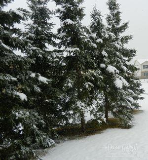 Snowfall Feb 2012