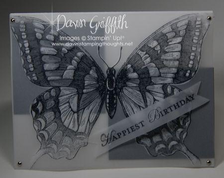 Butterfly highlight