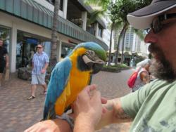 Parrot Rich #1