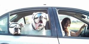 Doggies_wearing_shades_1