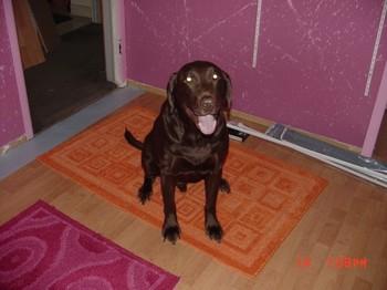 Bowzer_on_jessies_new_rugs